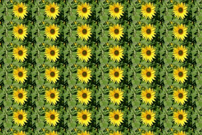 Vinylová Tapeta Letní slunečnice - Květiny