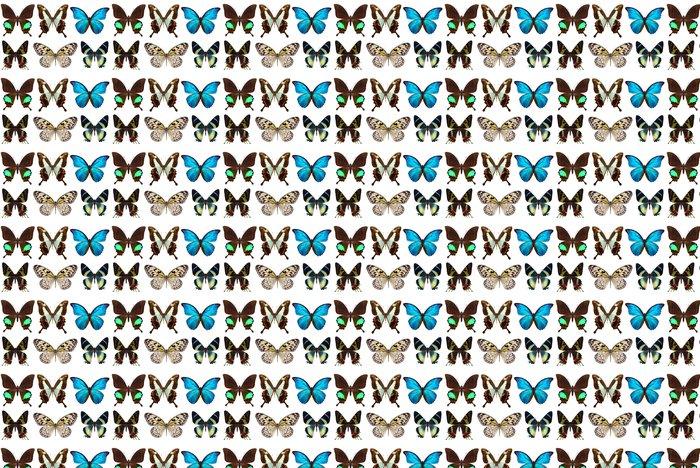 Vinylová Tapeta Mnoho různých motýlů - Svoboda