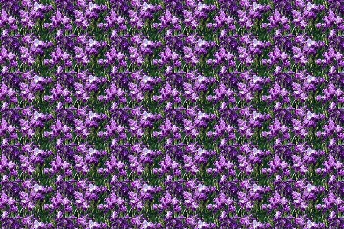 Vinylová Tapeta Mnoho fialové květy duhovky - Květiny