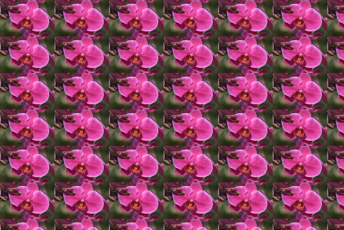 Vinylová Tapeta Růžová orchidej květiny v zahradě - Květiny