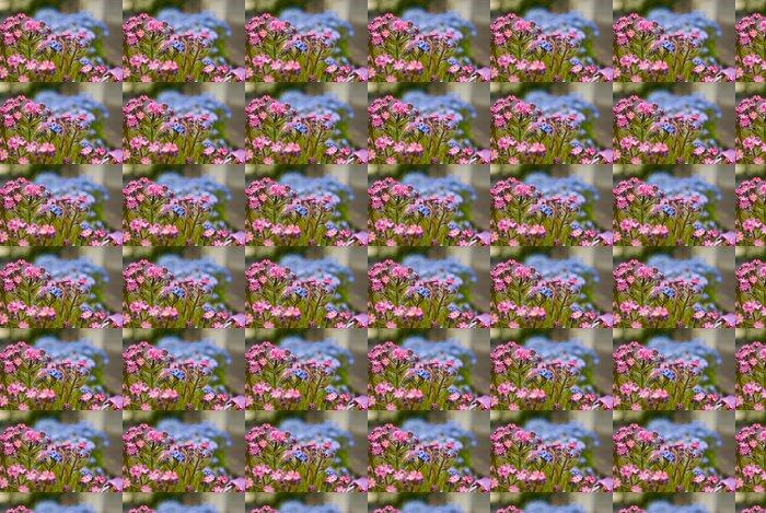 Vinylová Tapeta Forget-me-not květiny - Květiny