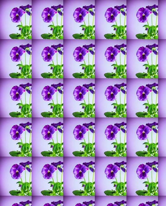 Vinylová Tapeta Fialové květy maceška - Květiny