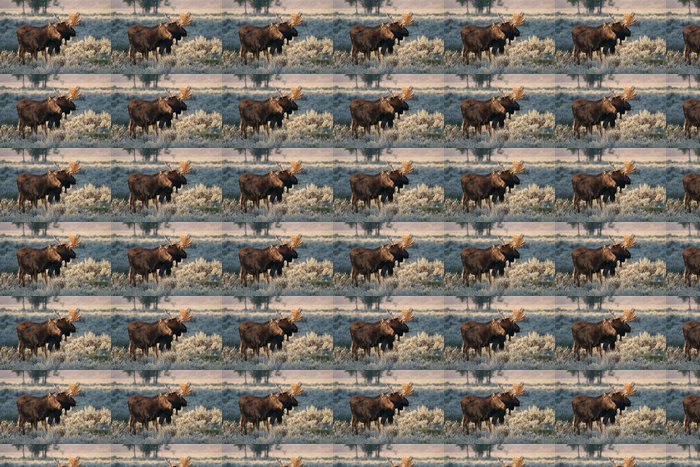 Vinylová Tapeta Býk a kráva los - Savci