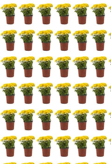 Vinylová Tapeta Krásné žluté chryzantémy v květináči izolované - Květiny