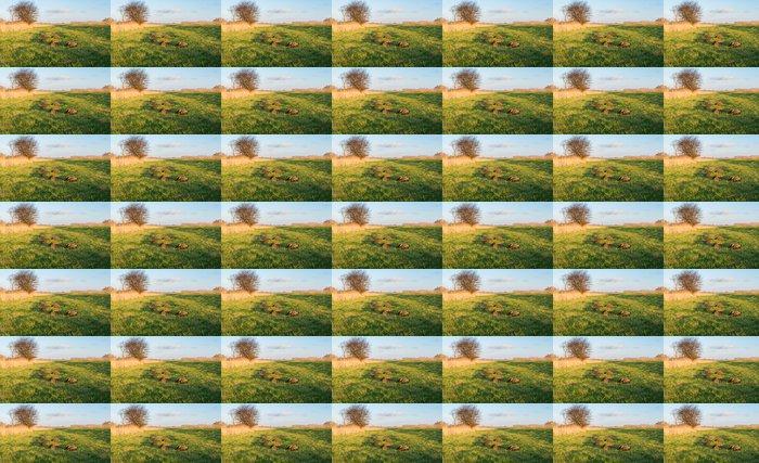 Vinylová Tapeta Komára v malém slunečním svitu - Roční období