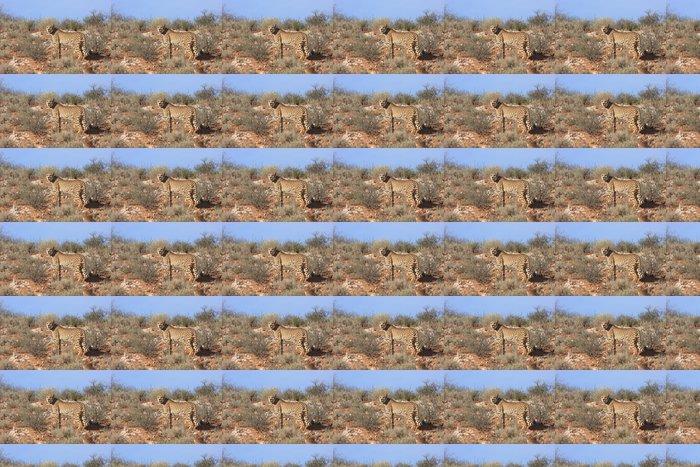 Vinylová Tapeta Gepard - Savci