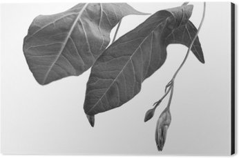 Impressão em Alumínio (Dibond) Macrophoto preto e branco de objeto planta com profundidade de campo