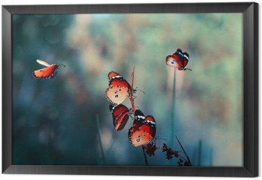 Ingelijst Canvas Butterfly