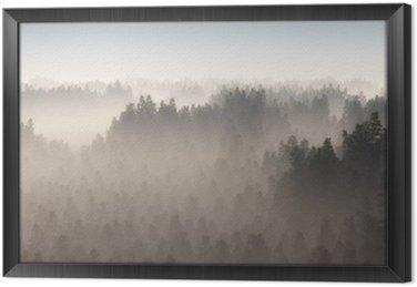 Ingelijst Canvas Dicht dennenbos in de ochtend nevel.