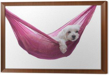 Ingelijst Canvas Gewoon opknoping rond - puppy hond in hangmat
