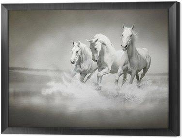 Ingelijst Canvas Kudde witte paarden die door water