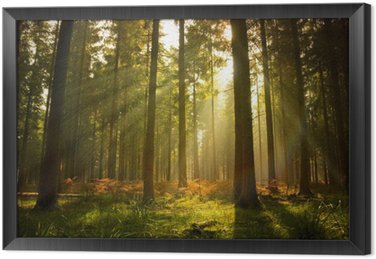Ingelijst Canvas Prachtig bos