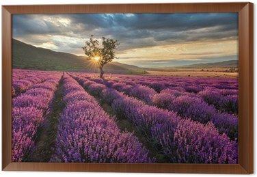 Ingelijst Canvas Prachtige landschap met lavendel veld bij zonsopgang