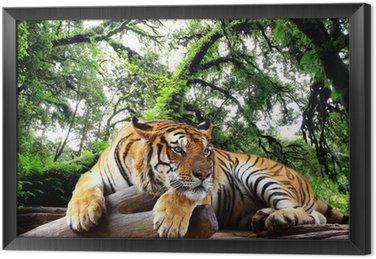 Ingelijst Canvas Tijger op zoek naar iets op de rots in tropische altijdgroene bos