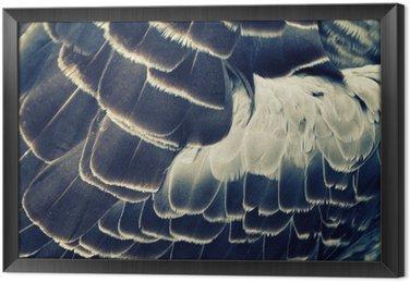 Ingelijst Canvas Vogel verenkleed achtergrond