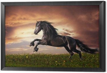 Ingelijst Canvas Zwarte Friese paarden in galop