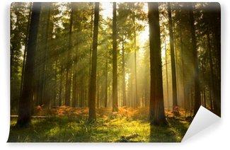Kaunis metsä Itsestäänkiinnittyvä Valokuvatapetti