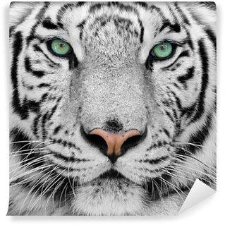 Valkoinen tiikeri Itsestäänkiinnittyvä Valokuvatapetti