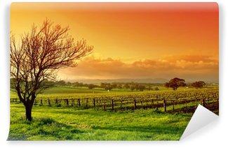 Viinitarhan maisemaa Itsestäänkiinnittyvä Valokuvatapetti