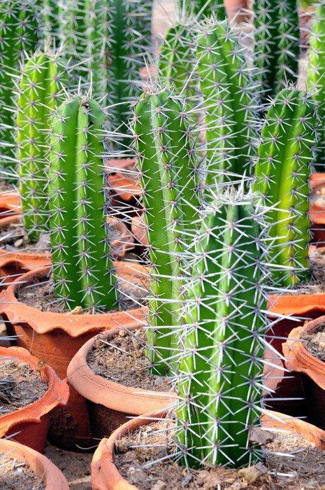 Pixerstick na Wszystko Kaktus rośnie - Rośliny