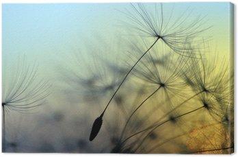 Kultainen auringonlasku ja voikukka, meditatiivinen zen taustalla Kangastuloste