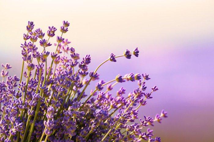 Kwadryptyk Kwitną kwiaty lawendy czas letni - Zioła