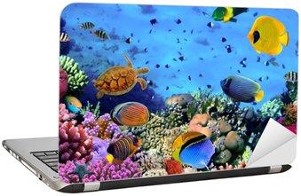 Laptop-Aufkleber Foto von einer Koralle Kolonie