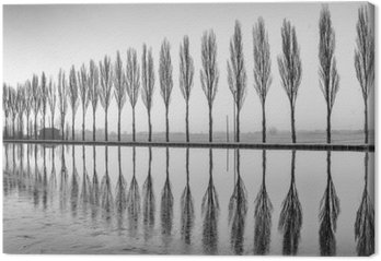 Leinwandbild Alberi riflessi sul lago all'alba in bianco e nero