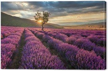 Leinwandbild Atemberaubende Landschaft mit Lavendelfeld bei Sonnenaufgang