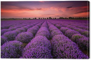 Leinwandbild Atemberaubende Landschaft mit Lavendelfeld bei Sonnenuntergang