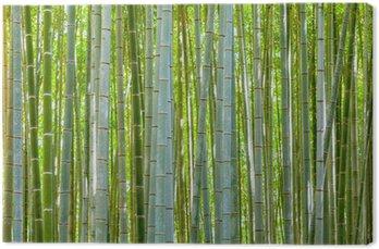 Leinwandbild Bambus-Hintergrund in der Natur am Tag