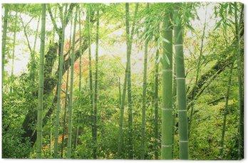 Leinwandbild Bambus-Wald