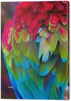 Leinwandbild Blau, rot und grün Federn Ara