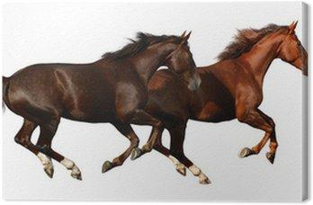 Leinwandbild Budenny Pferde galoppieren - isoliert auf weiß