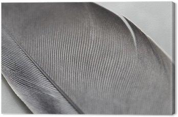 Leinwandbild Close-up von einer Feder