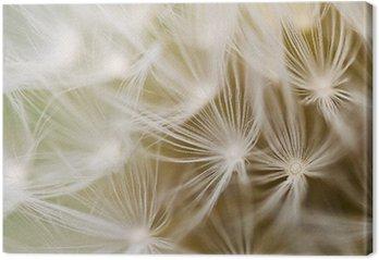 Leinwandbild Dandelion close-up