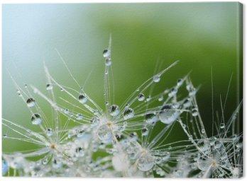 Leinwandbild Dandelion seed with drops