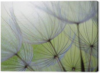 Leinwandbild Dandelion seed