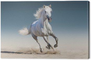 Leinwandbild Galoppierendes weißes Pferd