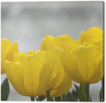 Leinwandbild Gelbe Tulpe
