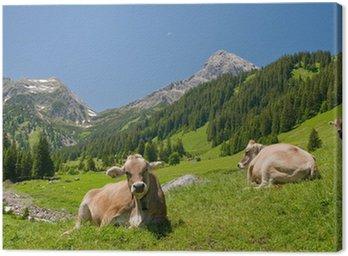 Leinwandbild Glückliche Kühe
