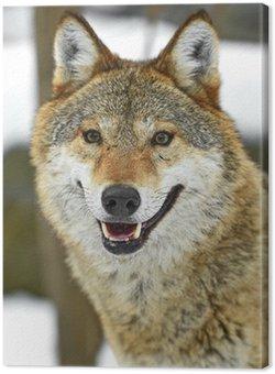 Leinwandbild Grauwolf