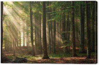 Leinwandbild Herbstwaldbäumen. Natur grünem Holz Sonnenlicht Hintergründe.