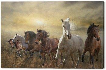 Leinwandbild Herde von Pferden im Galopp kostenlos bei Sonnenuntergang