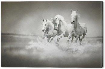 Leinwandbild Herde von weißen Pferden, die durch Wasser