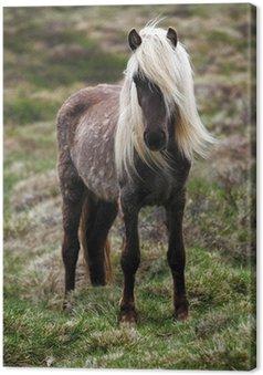 Leinwandbild Island-Pferd