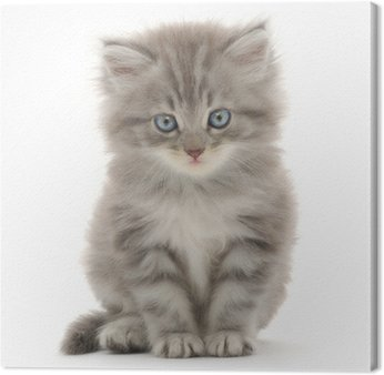 Leinwandbild Kätzchen auf einem weißen Hintergrund