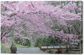 Leinwandbild Kirschblüte im Frühjahr