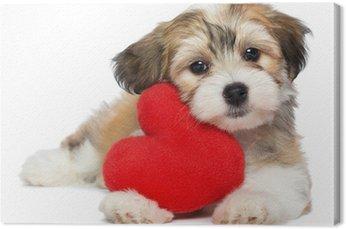 Leinwandbild Liebhaber Valentine Havaneser Welpen Hund mit einem roten Herzen