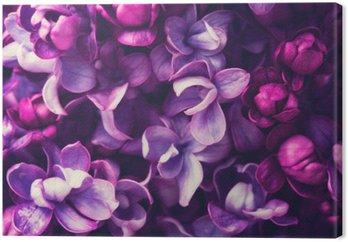 Leinwandbild Lila Blumen Hintergrund